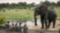 africa safaris hwange national park zimbabwe