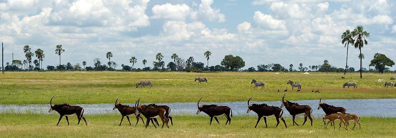 Safari holiday in Zimbabwe, Africa