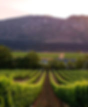 Holidays in the Cape Winelands