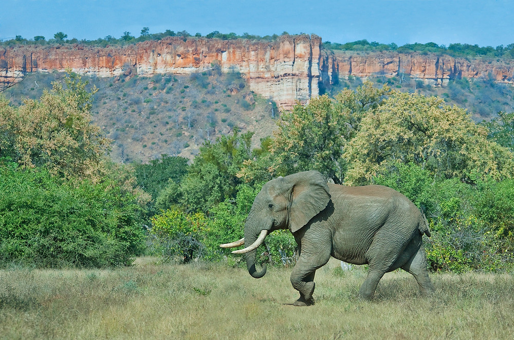Elephant with famous Gonerhazou Cliffs in the Background | African Safari Holiday in Zimbabwe