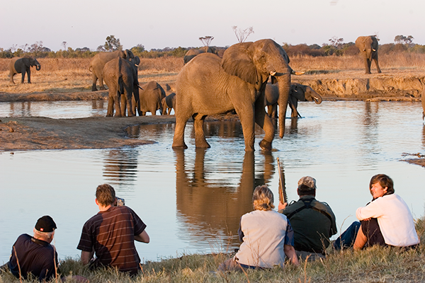 The Hide Camp: Hwange National Park