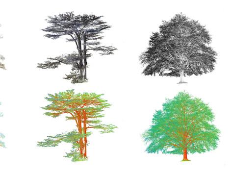 Caroline Locke: Significant Trees and Warning Bells