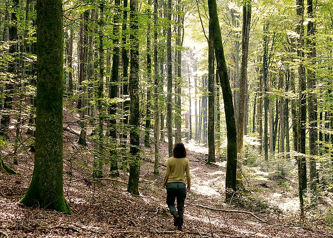 Waldwandern & Naturbegleitung