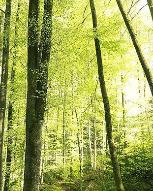 buchenwald.jpg