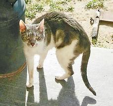 Stray Cat 3.jpg