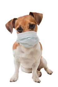 Dog-with-mask.png