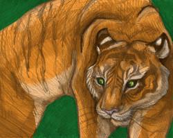 Tiger Digital Media Colour