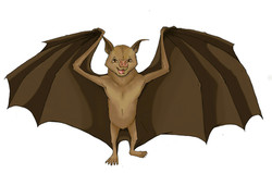 Bat illustration Educational Digital Media Bats without Borders