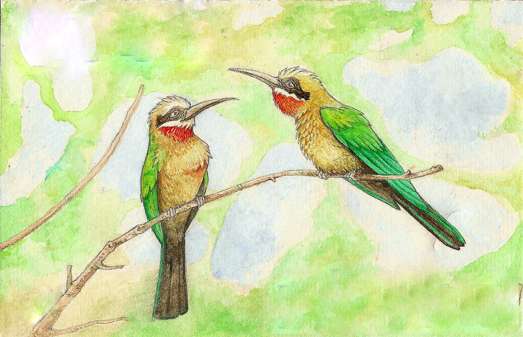 White Fronted Bee Eaters Traditional Media Watercolour Colour pencils