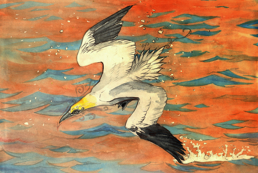 Northern Gannet Watercolour