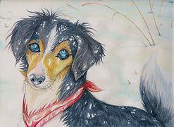 pet portrait nottingham illustrator illustration artist for hire present gift