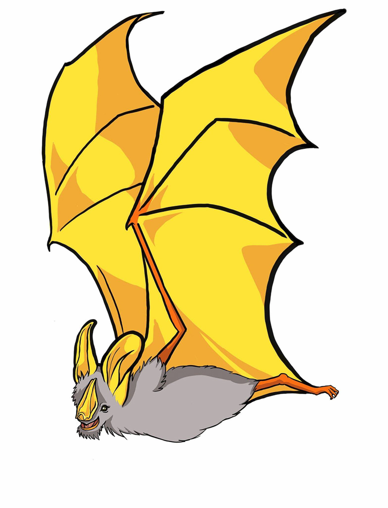 Bat illustration Educational Digital Media Bats without Borders