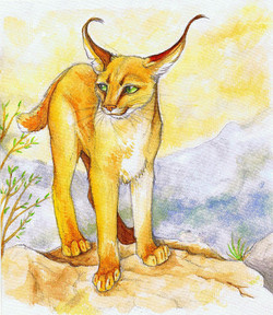 Caracal Traditional Media Watercolour