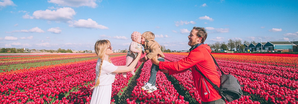 Dutch mother and father in a field of tulips with 2 young kids