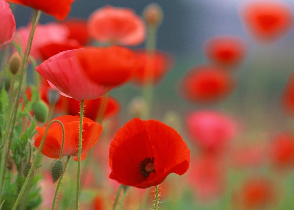 """""""Podrán cortar todas la flores, pero podrán detener la primavera"""" (Pablo Neruda)"""