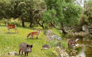 """Documental """"El bosque Mediterráneo"""""""