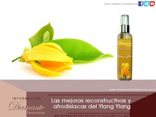 Las mejoras reconstructivas y afrodisíacas del Ylang Ylang