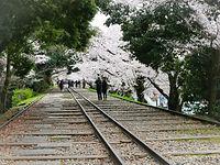 京都 桜 蹴上インクライン