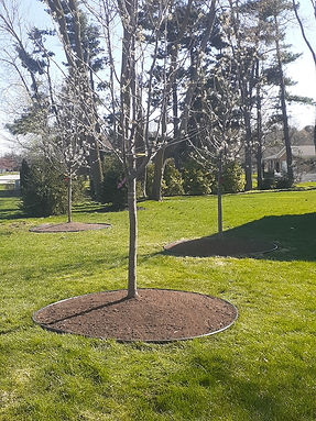 Trees Planted With Edging