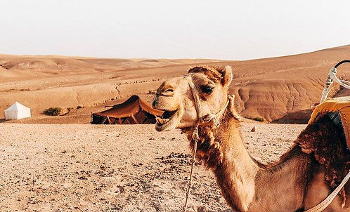 Camel Day 4.jpg