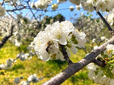 white-flower-4091537_1280.jpg