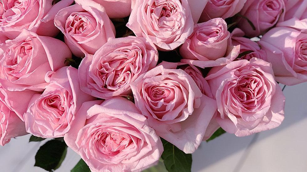 Пионовидные розы Дэвида Остина