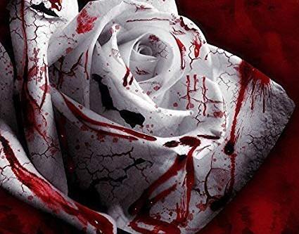 'Blood Rose' - Josie Stephens (Year 9)