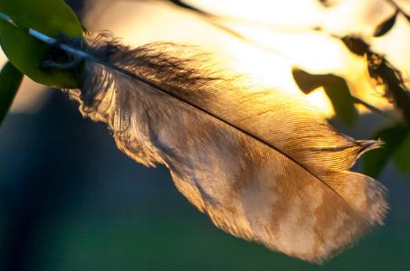 Plume d'Aigle et Robe Noire