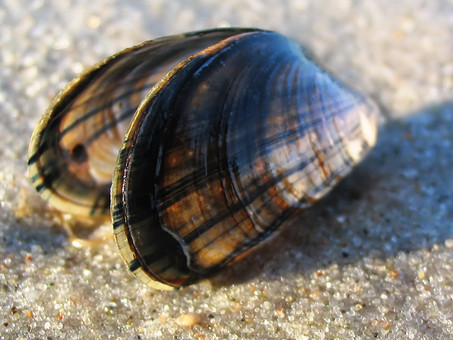 La gloire du Mollusque ©
