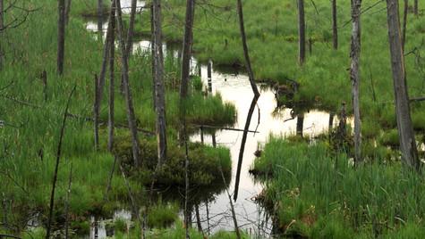 Panther Mt bog