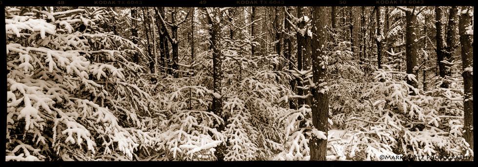McKenzie Wilderness