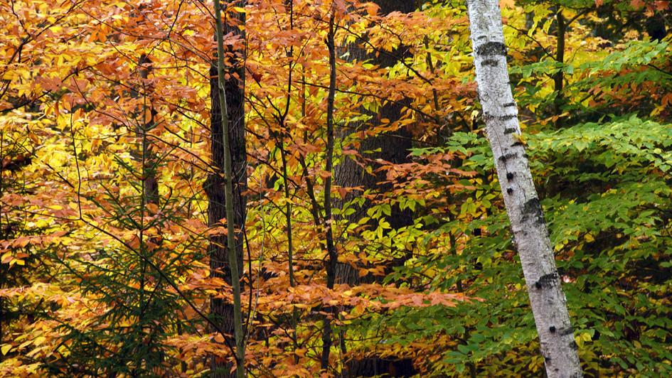 Autumn in Saranac Lake