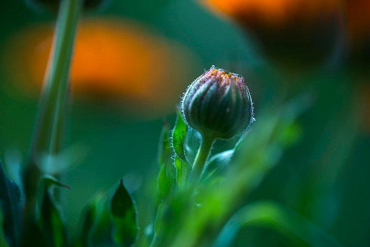 uli's flower.jpg