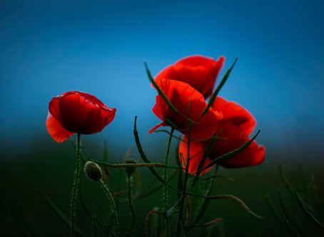 The Medicine of Intimacy & Aloneness