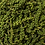 Thumbnail: Green Pepper - Fried - in grain
