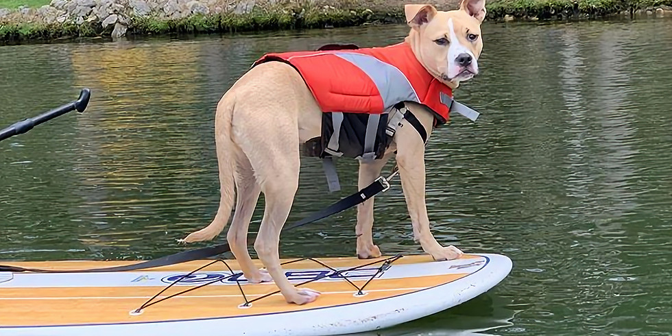 Private Paddle Boarding with your Dog Lessons