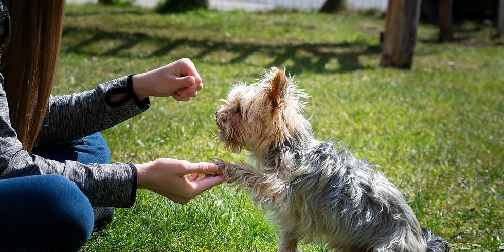 Free Family Dog Training Zoom Class