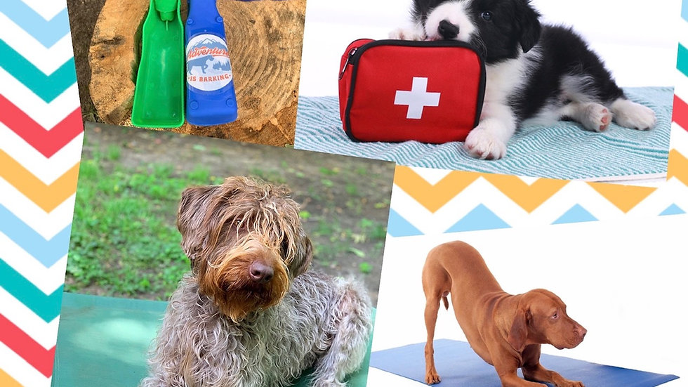 Adventure is Barking Subscription Box 12 Month Subscription