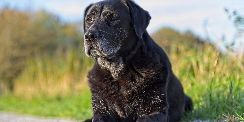 Virtual Training Seminar: Senior Dogs