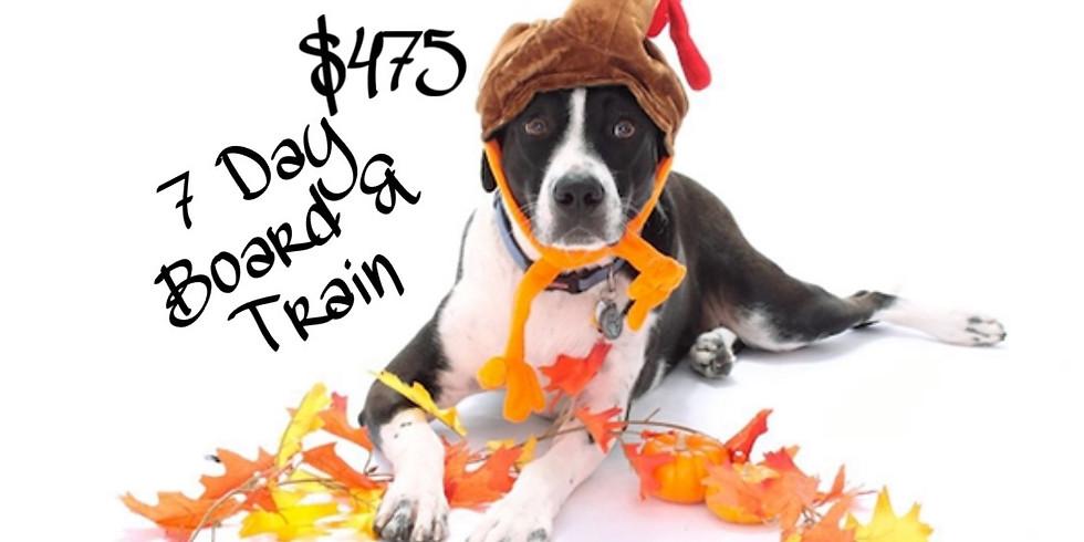 Thanksgiving Sale: 7 Day Board & Train