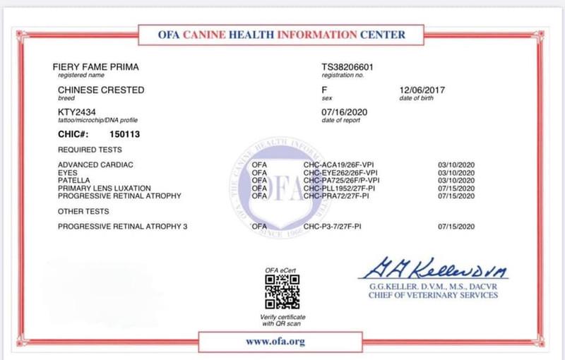 Stoli's CHIC Certificate