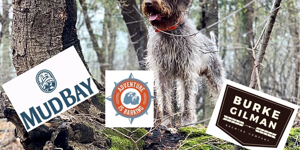 Hiking with your Dog: Safety, Training Tips and Tools
