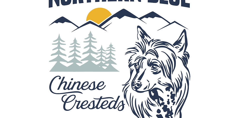 Northern Blue Chinese Cresteds Inquiries