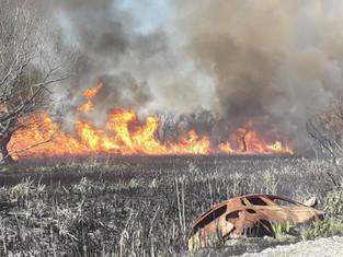 Proponen que en tierras incendiadas del delta se prohíba alterar el destino de uso: nada de cemento