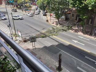 Se cayó un árbol en Avda. Libertador en Olivos