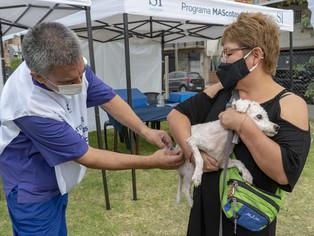 Vacunación gratuita de mascota