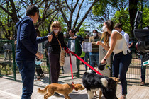 Mascotas: si estás sola y triste, San Isidro te adopta