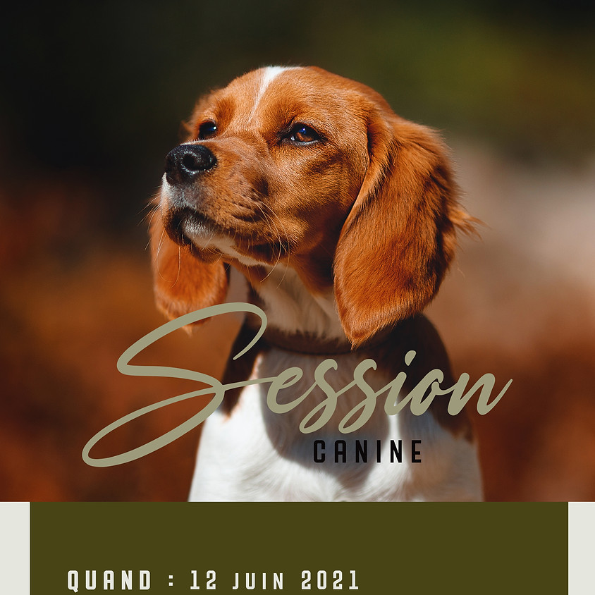 Session canine