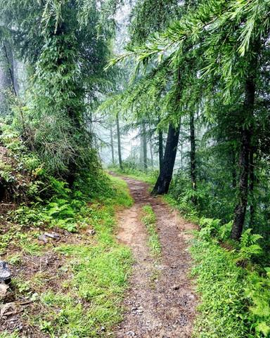 Nature Walk in the Mashobra Greens