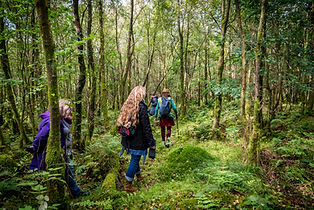 Liz Dawes Forest Bathing-49.jpg